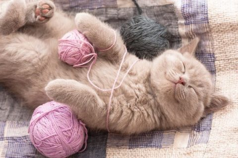 Từ A — Z về đồ chơi cho mèo | Top 10 món đồ không thể thiếu 2020 | by Mon's  Pet | Medium