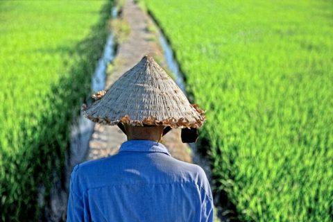 Các khoản thu phí đối với người làm nông nghiệp