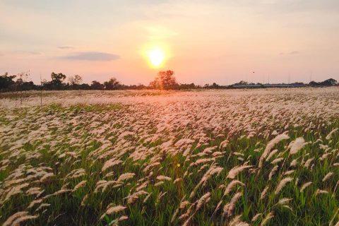 Cánh đồng cỏ lau trắng khiến giới trẻ Đà Nẵng đứng tim