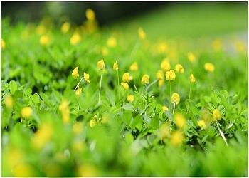 Giới thiệu sách tháng 12/2015: Tôi thấy hoa vàng trên cỏ xanh