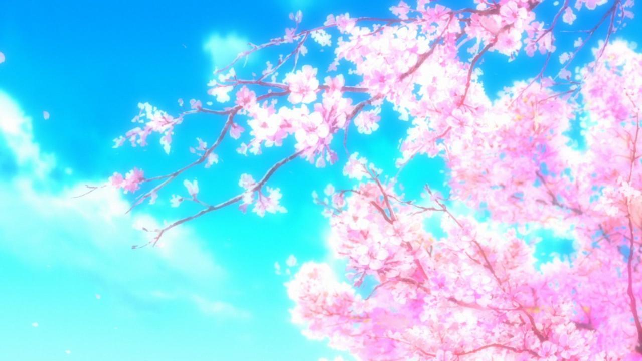 50 Hình nền hoa anh đào đẹp nhất của đất nước Nhật Bản   Hoa anh đào,  Anime, Hình ảnh