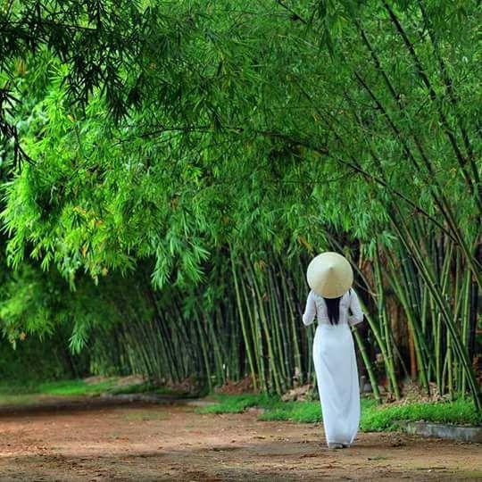 Lũy tre làng . - LW -Lũy tre làng . - LW - | High neck, High neck dress,  Fashion