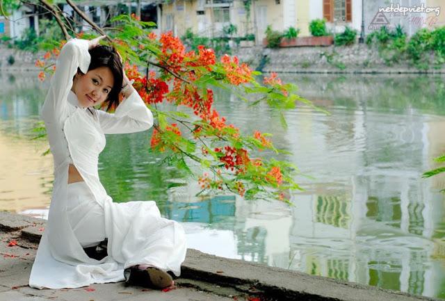 31 hình ảnh hoa phượng vỹ đẹp nhất ~ Hoa tươi Đà Nẵng Onthewebstores