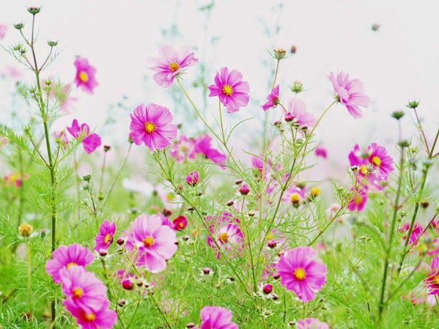 111 hình ảnh hoa đẹp nhất thế giới 2020