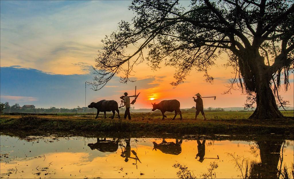 Những Hình Ảnh Làng Quê Việt Nam Yên Bình Đến Lạ