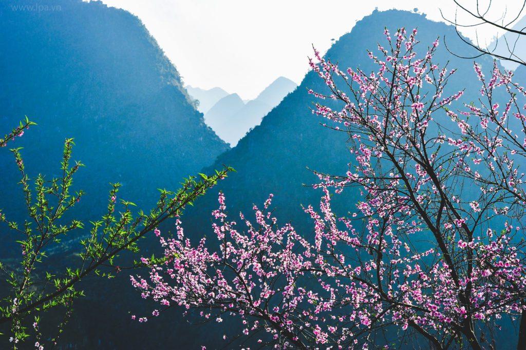 Xuân về trên cao nguyên đá Hà Giang