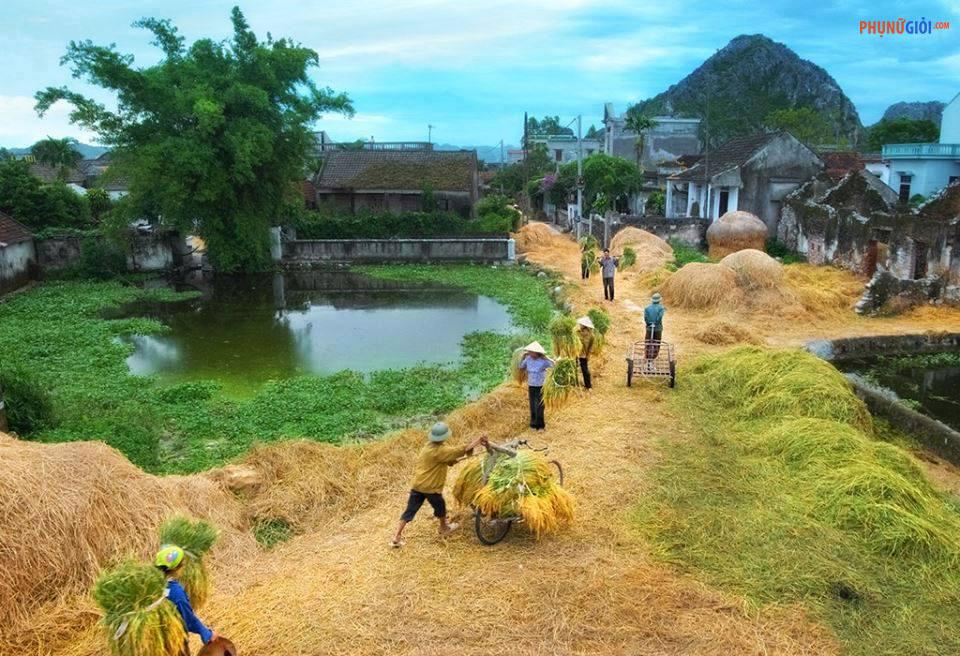 Thả hồn với những hình ảnh làng quê Việt Nam đẹp bình dị
