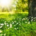 233 Bài Thơ Hay Về Nắng Lãng Mạn Chất Chứa đầy Yêu Thương - Đề án 2020 -  Tổng Hợp Chia Sẻ Hình ảnh, Tranh Vẽ, Biểu Mẫu Trong Lĩnh Vực Giáo Dục