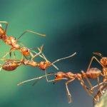 Đàn kiến chạy mưa