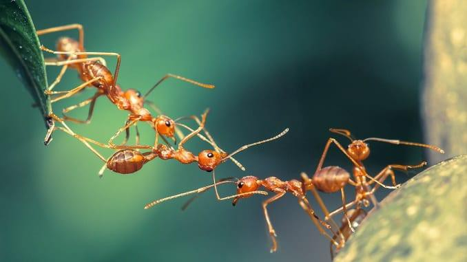 Đám ma con kiến