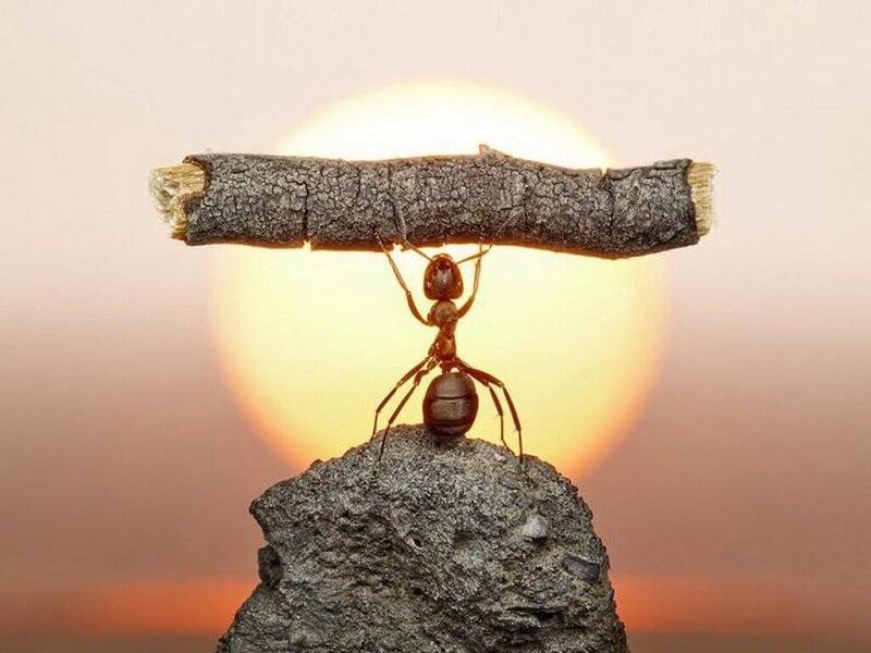 Kiên trì là gì? Rèn luyện sự kiên trì – chìa khóa của thành công!