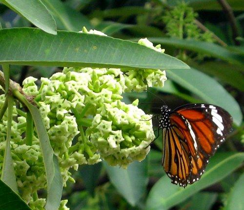 Status viết cho mùa thu Hoa sữa là loài hoa của luyến lưu - STTHAY