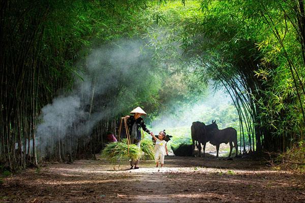 Ngắm nhìn] Hình ảnh làng quê Việt Nam yên bình, mộc mạc
