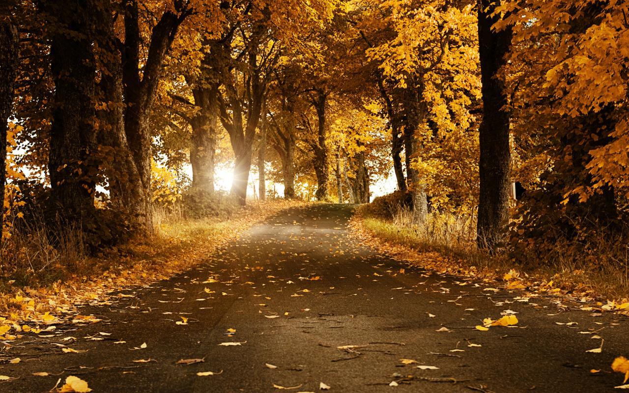 Top 40 Hình ảnh đẹp về mùa thu lãng mạn nhất thế giới