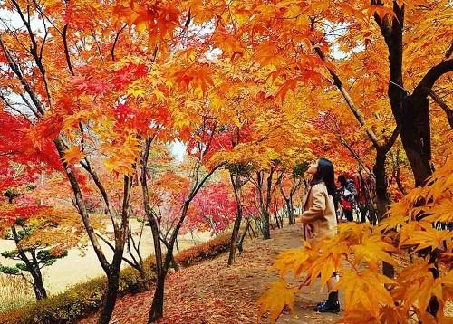 Bí kíp tạo dáng chụp ảnh đẹp trong mùa thu - VnExpress Du lịch