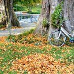 Lục bát mùa thu
